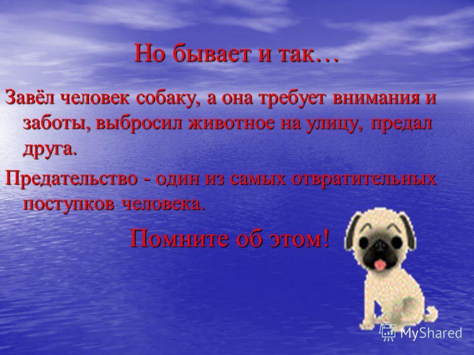 Но бывает и так… Завёл человек собаку, а она требует внимания и заботы, выбросил животное на улицу, предал друга. Предательство - один из самых отвратительных поступков человека. Помните об этом! Помните об этом!