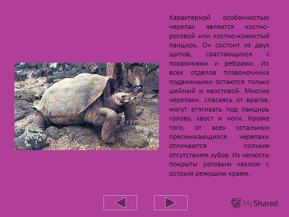 Отряд Черепахи
