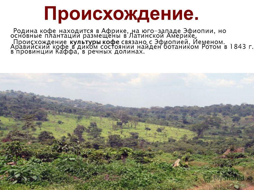 Происхождение. Родина кофе находится в Африке, на юго-западе Эфиопии, но основные плантации размещены в Латинской Америке. Происхождение культуры кофе связано с Эфиопией, Йеменом. Аравийский кофе в диком состоянии найден ботаником Ротом в 1843 г. в п