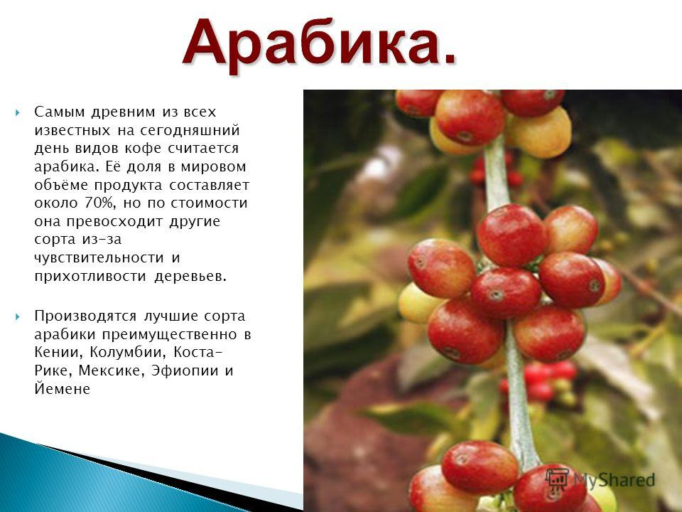 Самым древним из всех известных на сегодняшний день видов кофе считается арабика. Её доля в мировом объёме продукта составляет около 70%, но по стоимости она превосходит другие сорта из-за чувствительности и прихотливости деревьев. Производятся лучши