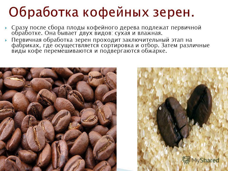 Сразу после сбора плоды кофейного дерева подлежат первичной обработке. Она бывает двух видов: сухая и влажная. Первичная обработка зерен проходит заключительный этап на фабриках, где осуществляется сортировка и отбор. Затем различные виды кофе переме