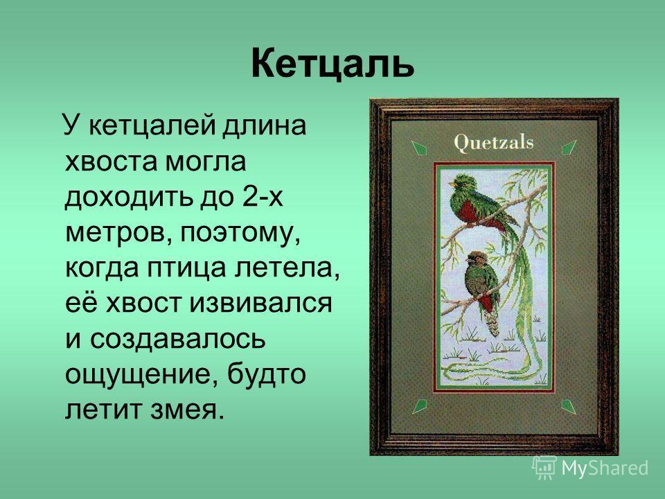 Кетцаль У кетцалей длина хвоста могла доходить до 2-х метров, поэтому, когда птица летела, её хвост извивался и создавалось ощущение, будто летит змея.