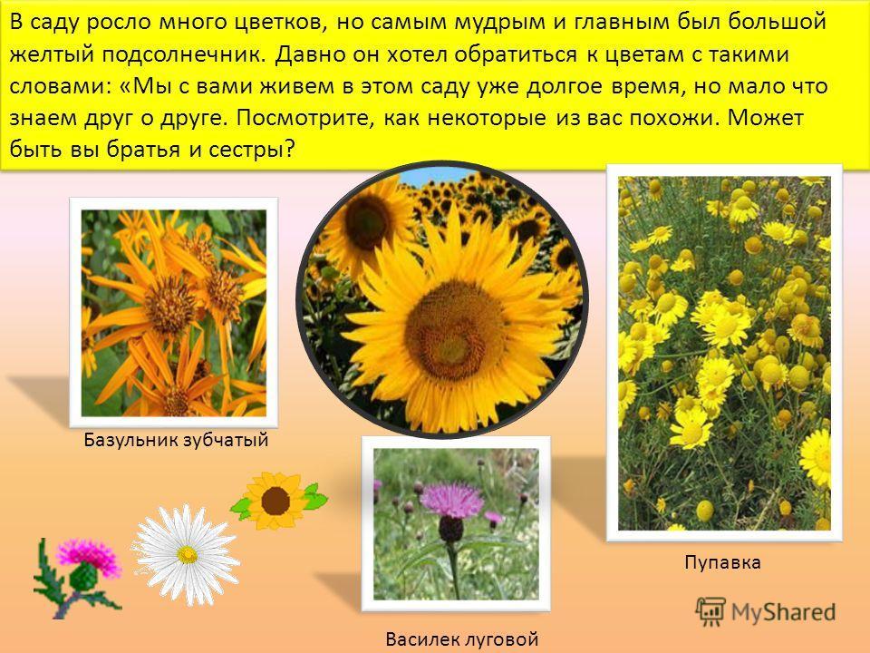 В саду росло много цветков, но самым мудрым и главным был большой желтый подсолнечник. Давно он хотел обратиться к цветам с такими словами: «Мы с вами живем в этом саду уже долгое время, но мало что знаем друг о друге. Посмотрите, как некоторые из ва