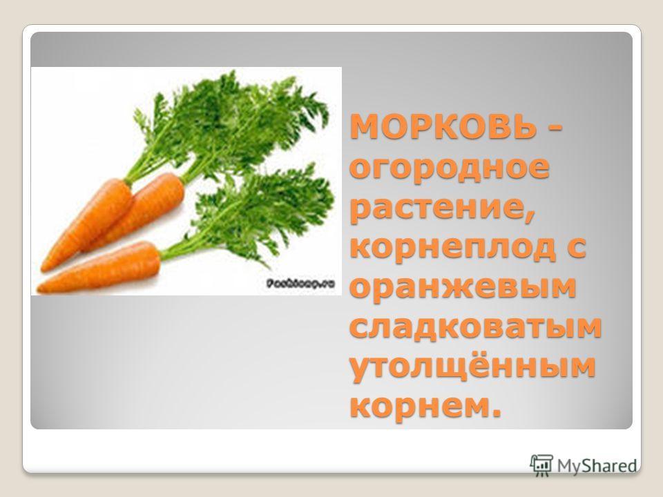 МОРКОВЬ - огородное растение, корнеплод с оранжевым сладковатым утолщённым корнем.