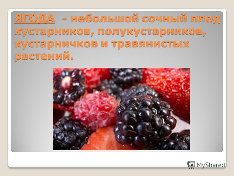 ЯГОДА - небольшой сочный плод кустарников, полукустарников, кустарничков и травянистых растений.