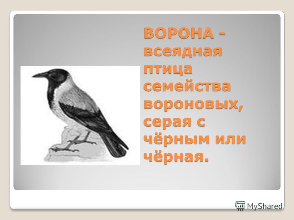BOPOHA - всеядная птица семейства вороновых, серая с чёрным или чёрная.