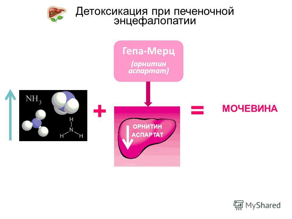 Детоксикация при печеночной энцефалопатии ОРНИТИН АСПАРТАТ + МОЧЕВИНА = Гепа-Мерц (орнитин аспартат)