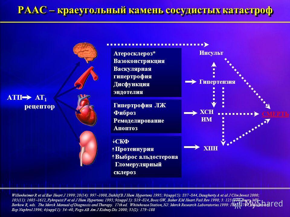 СКФ Протеинурия Выброс альдостерона Гломерулярный склероз Атеросклероз* Вазоконстрикция Васкулярная гипертрофия Дисфункция эндотелия РААС – краеугольный камень сосудистых катастроф Willenheimer R et al Eur Heart J 1999; 20(14): 997 1008, Dahlöf B J H