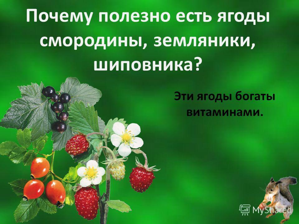 Почему полезно есть ягоды смородины, земляники, шиповника? Эти ягоды богаты витаминами.