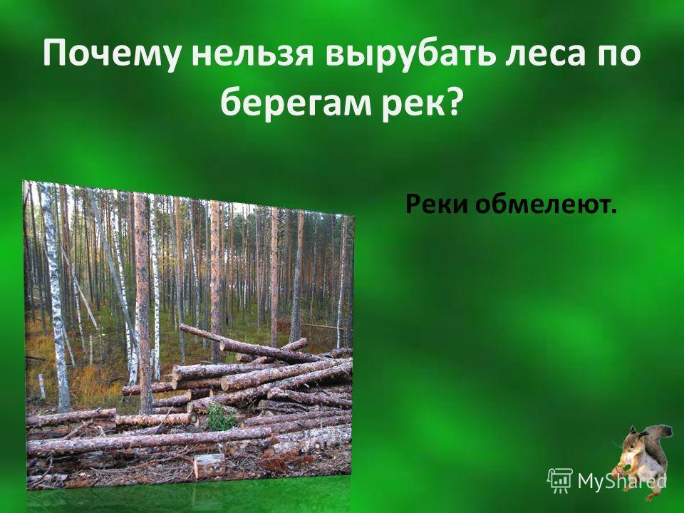 Почему нельзя вырубать леса по берегам рек? Реки обмелеют.