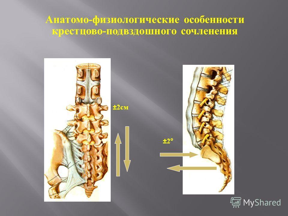 ± 2см ±2°±2° Анатомо-физиологические особенности крестцово-подвздошного сочленения
