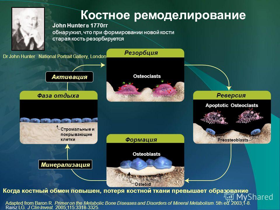 Adapted from Baron R. Primer on the Metabolic Bone Diseases and Disorders of Mineral Metabolism. 5th ed. 2003;1-8. Raisz LG. J Clin Invest. 2005;115:3318-3325. Резорбция Реверсия Stromal and bone lining cells Osteoid Preosteoblasts Формация Минерализ