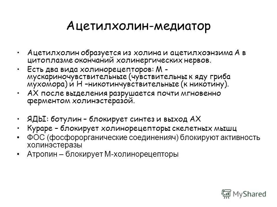 Ацетилхолин-медиатор Ацетилхолин образуется из холина и ацетилхоэнзима А в цитоплазме окончаний холинергических нервов. Есть два вида холинорецепторов: М - мускариночувствительные (чувствительны к яду гриба мухомора) и Н –никотинчувствительные (к ник