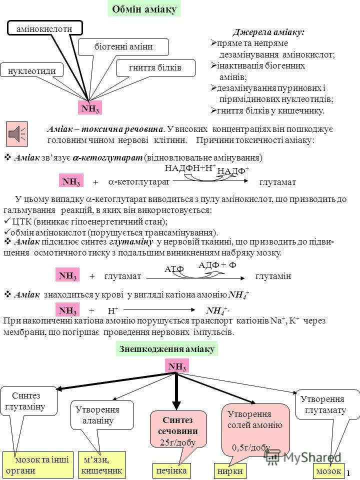 Аміак – токсична речовина. У високих концентраціях він пошкоджує головним чином нервові клітини. Причини токсичності аміаку: Обмін аміаку NН3NН3 амінокислоти нуклеотиди біогенні аміни гниття білків Джерела аміаку: пряме та непряме дезамінування аміно