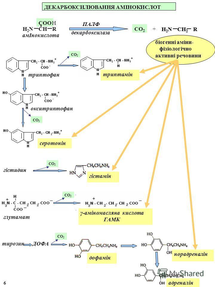 ДЕКАРБОКСИЛЮВАННЯ АМІНОКИСЛОТ СО 2 декарбоксилаза ПАЛФ + серотонін триптофан біогенні аміни- фізіологічно активні речовини триптамін СО 2 глутамат γ-аміномасляна кислота ГАМК СО 2 Н 2 N СН 2 R амІнокислота Н 2 N СН R СООН адреналін дофамін тирозин СО