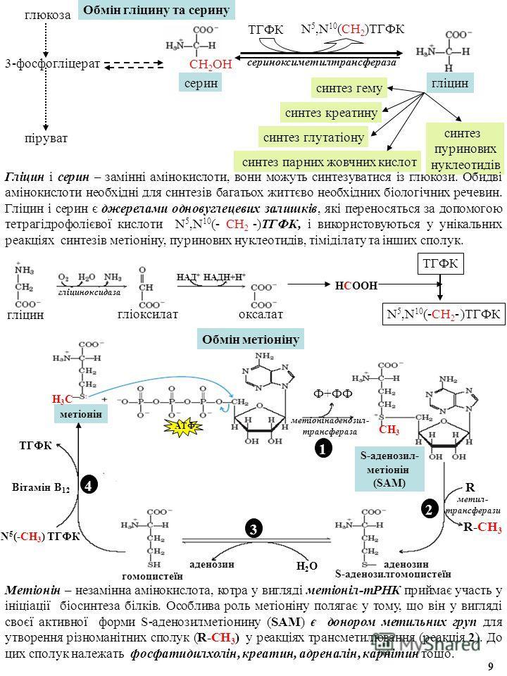 Обмін гліцину та серину глюкоза 3-фосфогліцерат піруват серин синтез глутатіону синтез гему синтез пуринових нуклеотидів синтез парних жовчних кислот синтез креатину ТГФК N 5,N 10 (СН 2 )ТГФК СН 2 ОН сериноксиметилтрансфераза гліцин гліциноксидаза гл