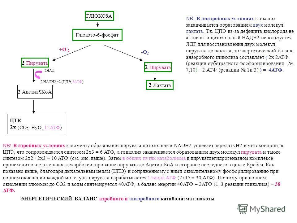 ГЛЮКОЗА Глюкозо-6-фосфат 2 Пирувата ЦТК 2х (СО 2, Н 2 О, 12АТФ) 2 Лактата 2 АцетилSKoA NB! В аэробных условиях к моменту образования пирувата цитозольный NADH2 успевает передать Н2 в митохондрии, в ЦПЭ, что сопровождается синтезом 2х3 = 6 АТФ, а глик