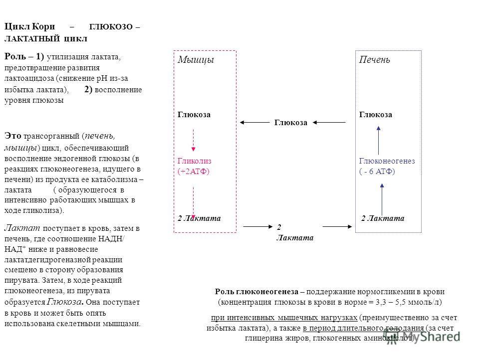 Цикл Кори – ГЛЮКОЗО – ЛАКТАТНЫЙ цикл Роль – 1) утилизация лактата, предотвращение развития лактоацидоза (снижение рН из-за избытка лактата), 2) восполнение уровня глюкозы Это трансорганный ( печень, мышцы ) цикл, обеспечивающий восполнение эндогенной