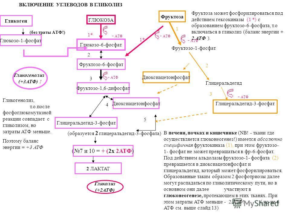 ВКЛЮЧЕНИЕ УГЛЕВОДОВ В ГЛИКОЛИЗ ГЛЮКОЗА Глюкозо-6-фосфат - АТФ Фруктозо-6-фосфат - АТФ Фруктозо-1,6-дифосфат Глицеральдегид-3-фосфат Диоксиацетонфосфат 1* 2 3 4 5 (образуется 2 глицеральдегид-3-фосфата) (7 и 10 = + (2х 2АТФ) 2 ЛАКТАТ Гликоген Глюкозо-