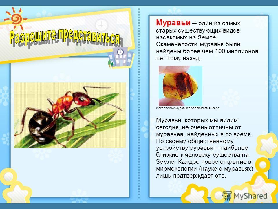 Муравьи – один из самых старых существующих видов насекомых на Земле. Окаменелости муравья были найдены более чем 100 миллионов лет тому назад. Ископаемые муравьи в балтийском янтаре Муравьи, которых мы видим сегодня, не очень отличны от муравьев, на