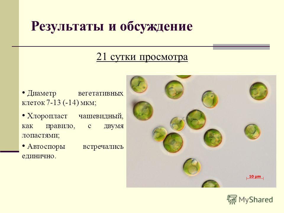 Результаты и обсуждение 21 сутки просмотра Диаметр вегетативных клеток 7-13 (-14) мкм; Хлоропласт чашевидный, как правило, с двумя лопастями; Автоспоры встречались единично.