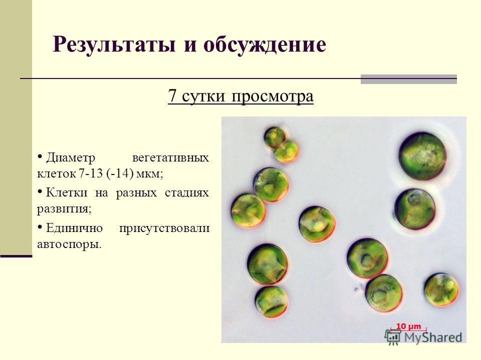 Результаты и обсуждение 7 сутки просмотра Диаметр вегетативных клеток 7-13 (-14) мкм; Клетки на разных стадиях развития; Единично присутствовали автоспоры.