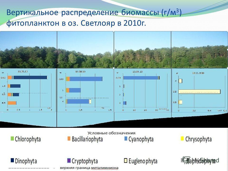 Вертикальное распределение биомассы (г/м 3 ) фитопланктон в оз. Светлояр в 2010г.