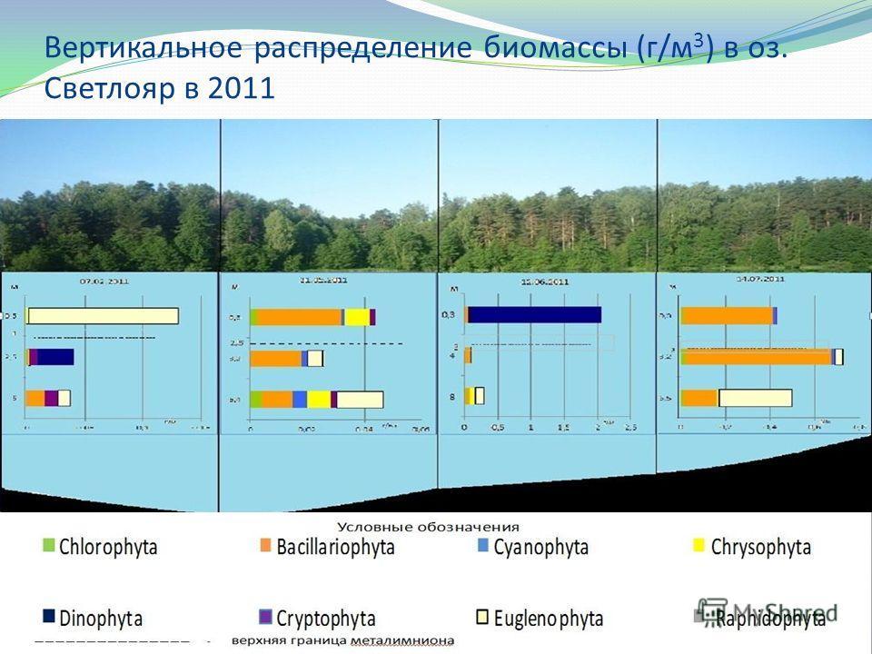 Вертикальное распределение биомассы (г/м 3 ) в оз. Светлояр в 2011