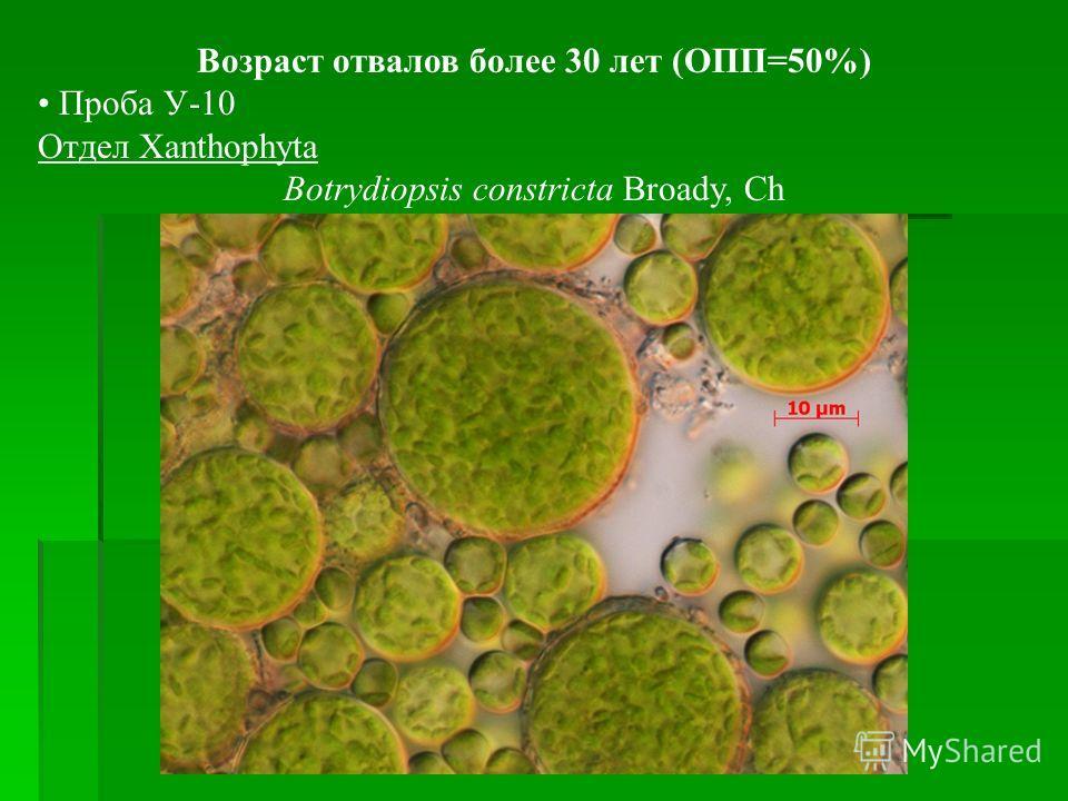 Возраст отвалов более 30 лет (ОПП=50%) Проба У-10 Отдел Xanthophyta Botrydiopsis constricta Broady, Ch