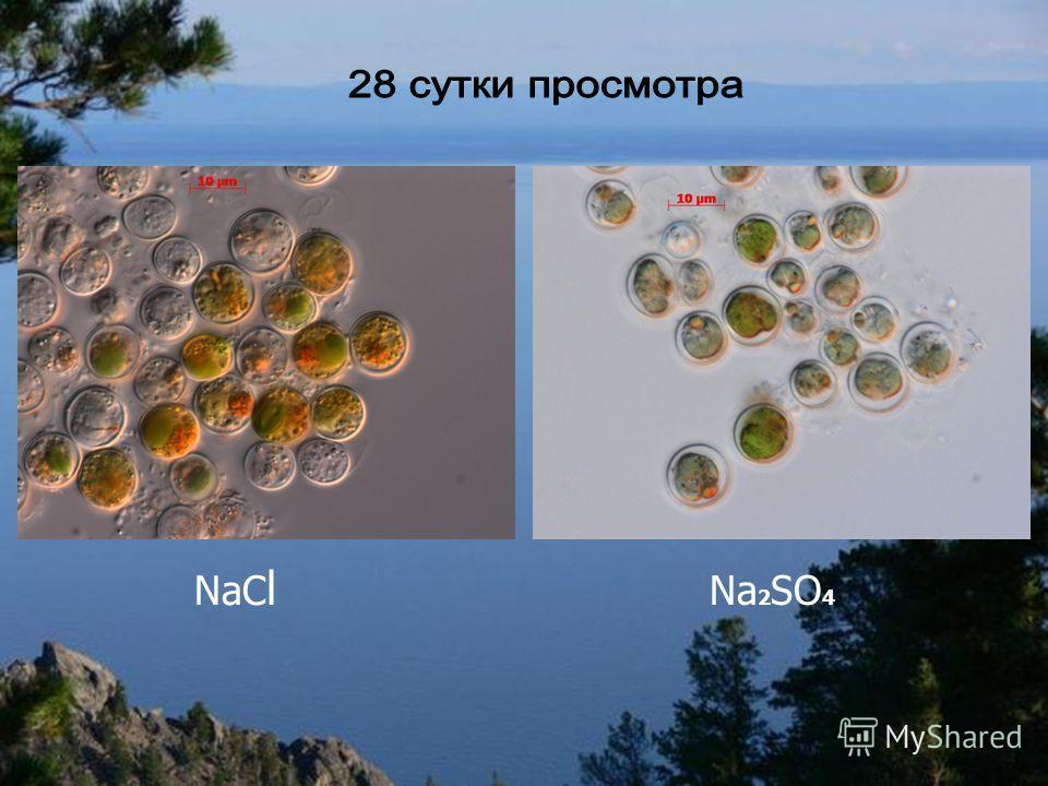 NaC l Na 2 SO 4