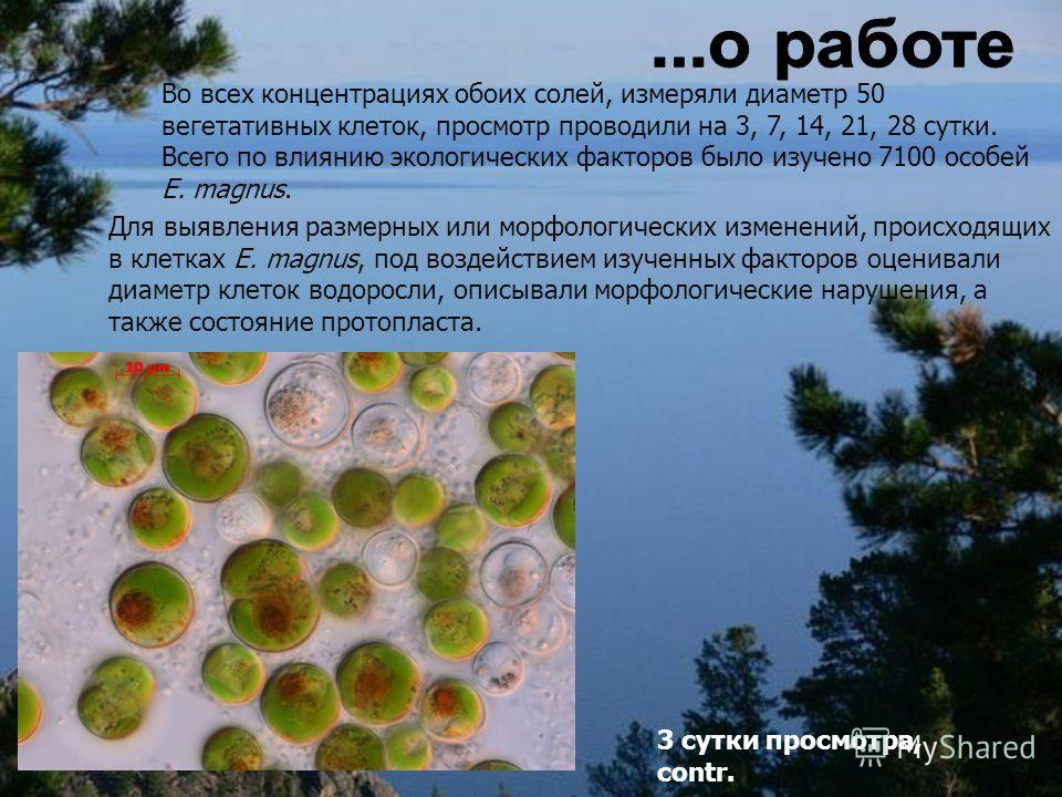 Во всех концентрациях обоих солей, измеряли диаметр 50 вегетативных клеток, просмотр проводили на 3, 7, 14, 21, 28 сутки. Всего по влиянию экологических факторов было изучено 7100 особей E. magnus. Для выявления размерных или морфологических изменени