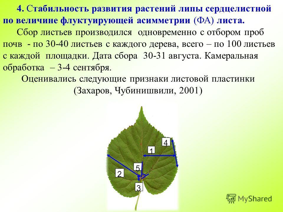4. Стабильность развития растений липы сердцелистной по величине флуктуирующей асимметрии (ФА) листа. Сбор листьев производился одновременно с отбором проб почв - по 30-40 листьев с каждого дерева, всего – по 100 листьев с каждой площадки. Дата сбора