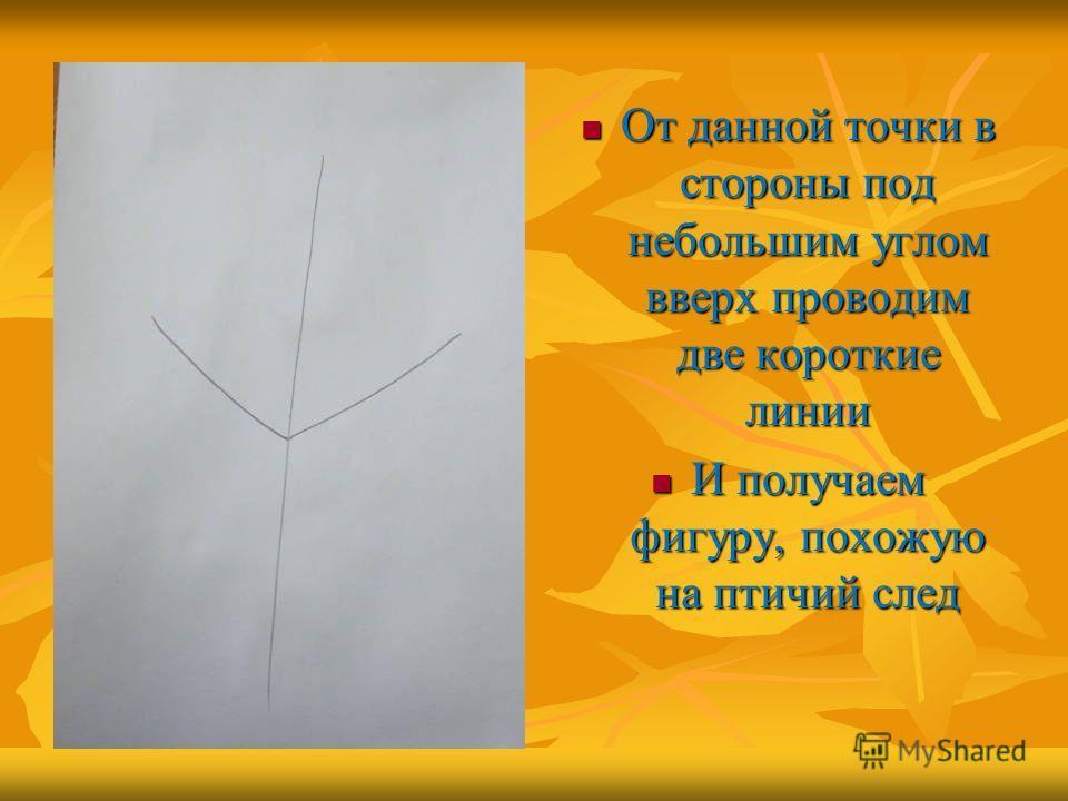 От данной точки в стороны под небольшим углом вверх проводим две короткие линии От данной точки в стороны под небольшим углом вверх проводим две короткие линии И получаем фигуру, похожую на птичий след И получаем фигуру, похожую на птичий след
