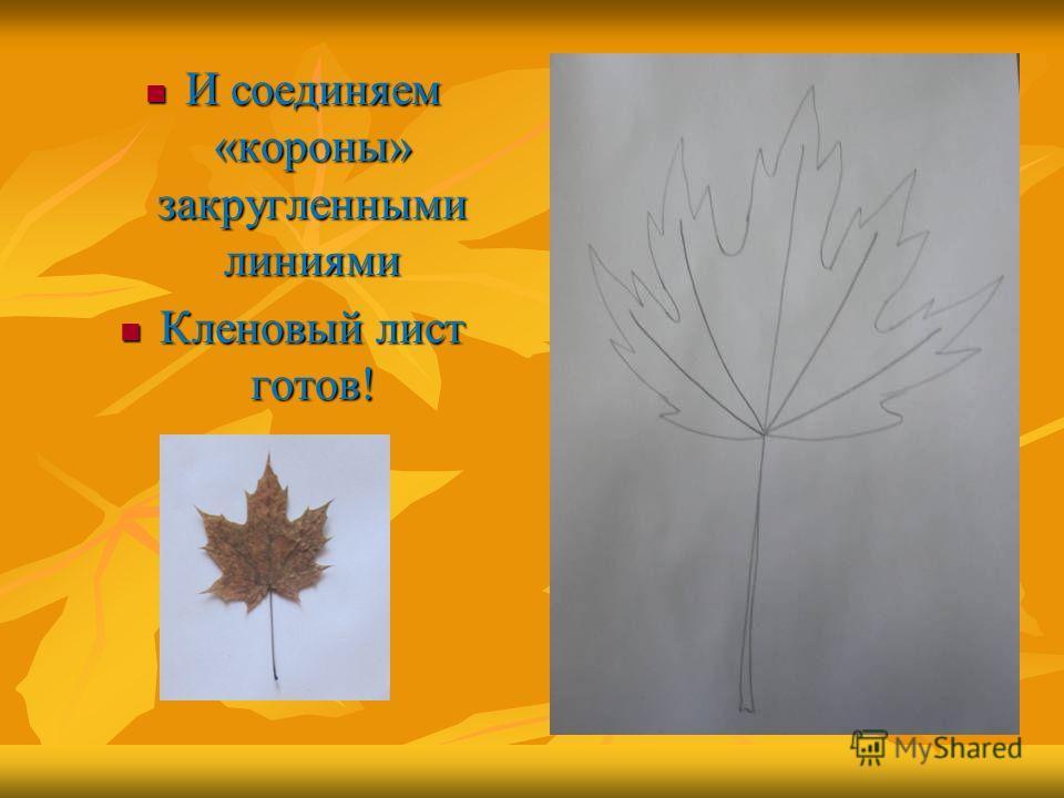 И соединяем «короны» закругленными линиями И соединяем «короны» закругленными линиями Кленовый лист готов! Кленовый лист готов!
