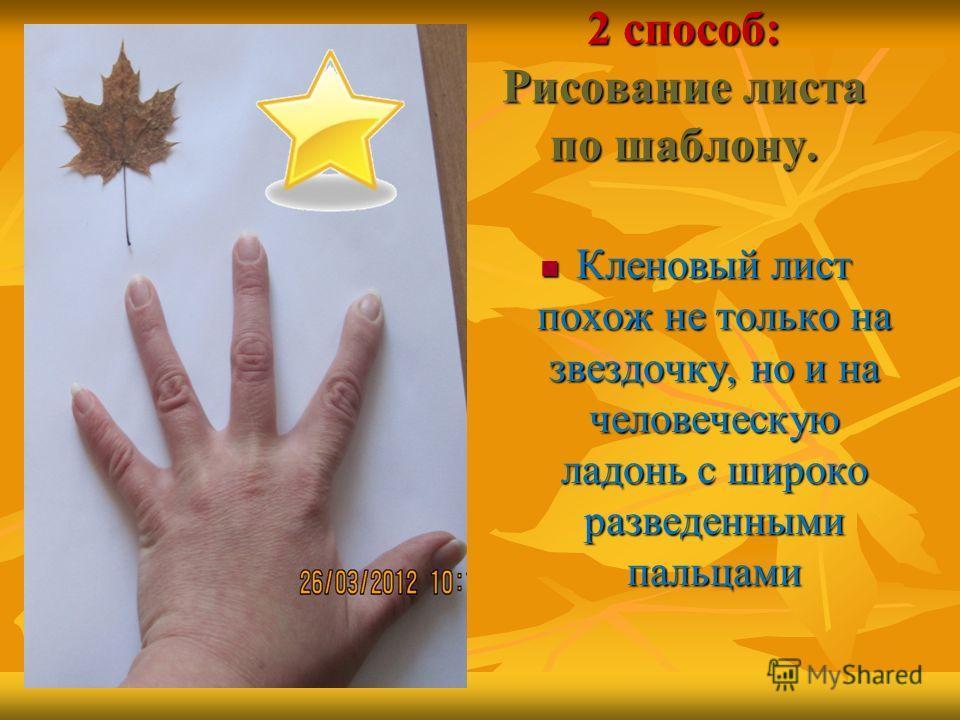 2 способ: Рисование листа по шаблону. Кленовый лист похож не только на звездочку, но и на человеческую ладонь с широко разведенными пальцами Кленовый лист похож не только на звездочку, но и на человеческую ладонь с широко разведенными пальцами