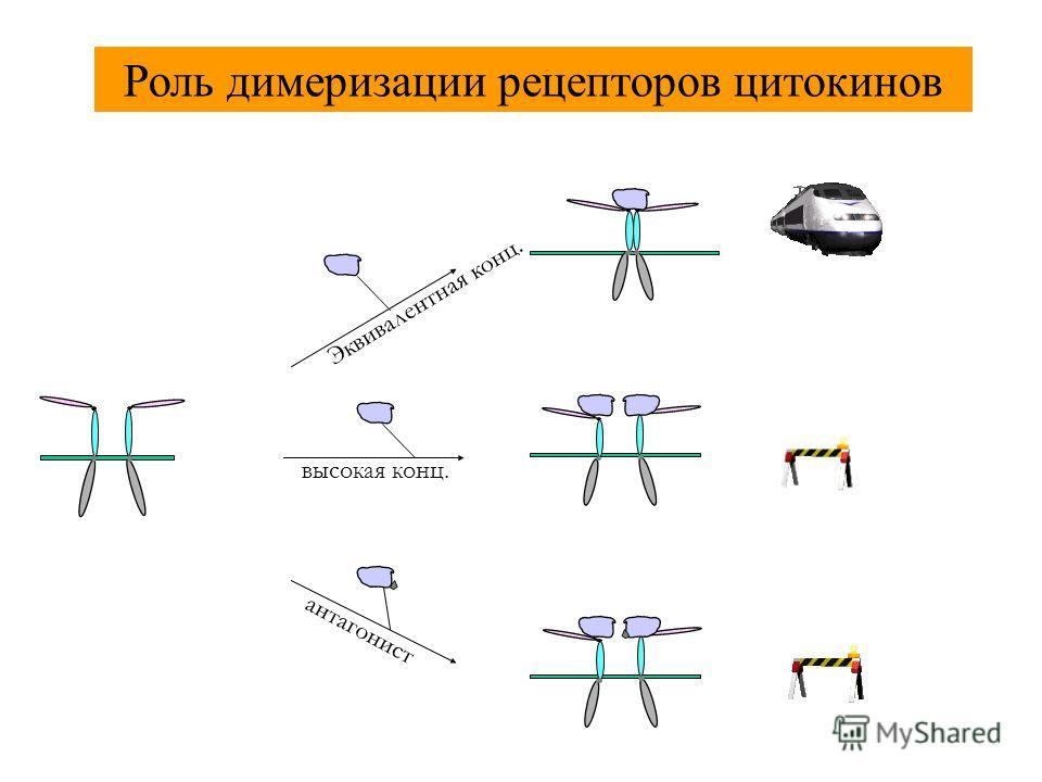 Эквивалентная конц. высокая конц. антагонист Роль димеризации рецепторов цитокинов