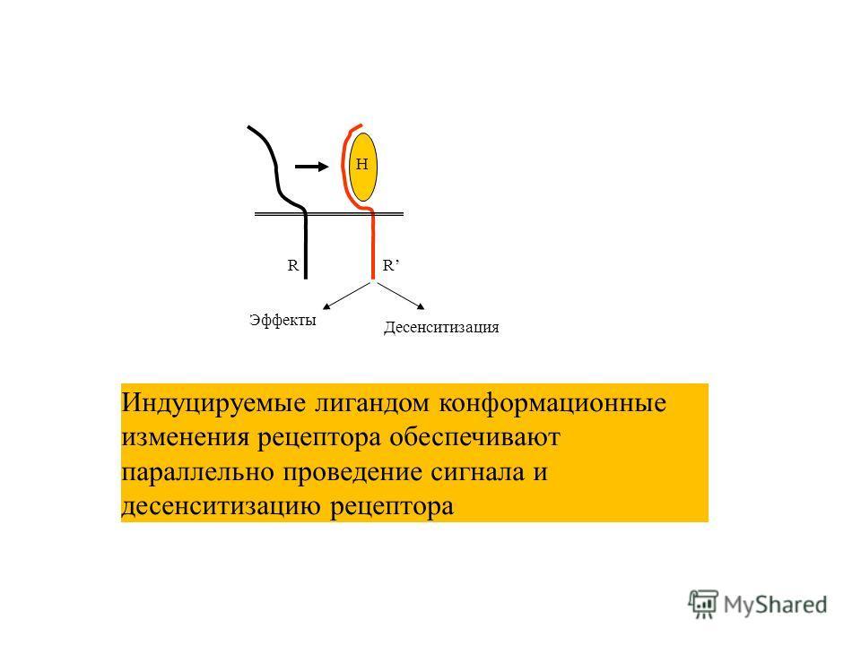 Эффекты Десенситизация RR H Индуцируемые лигандом конформационные изменения рецептора обеспечивают параллельно проведение сигнала и десенситизацию рецептора