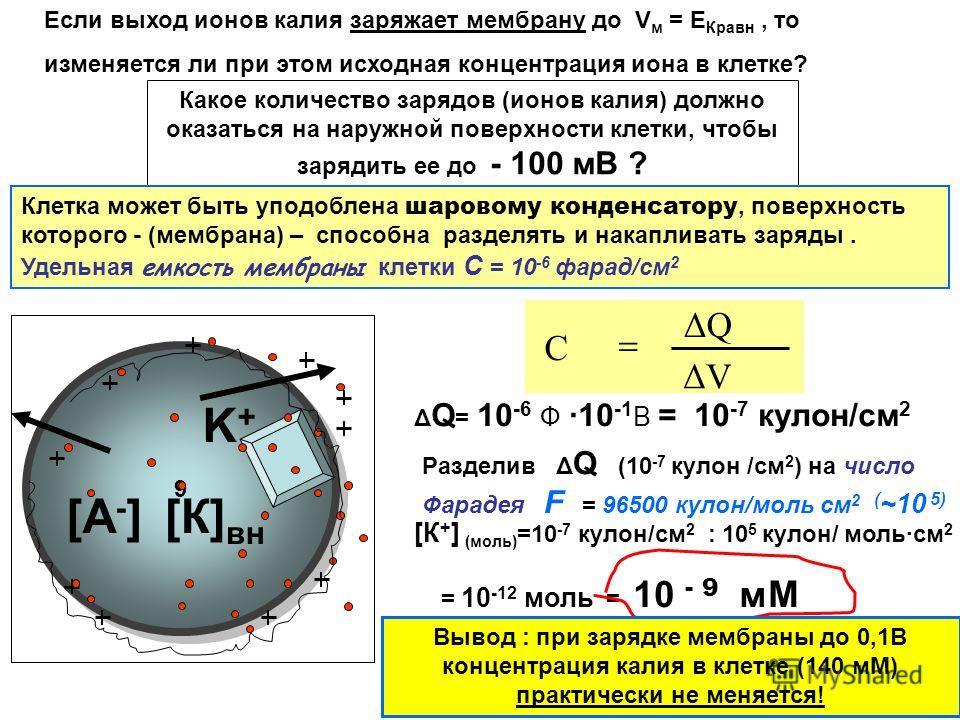 9 9 K+K+ Если выход ионов калия заряжает мембрану до V м = Е Кравн, то изменяется ли при этом исходная концентрация иона в клетке? [К] вн [А-][А-] Какое количество зарядов (ионов калия) должно оказаться на наружной поверхности клетки, чтобы зарядить