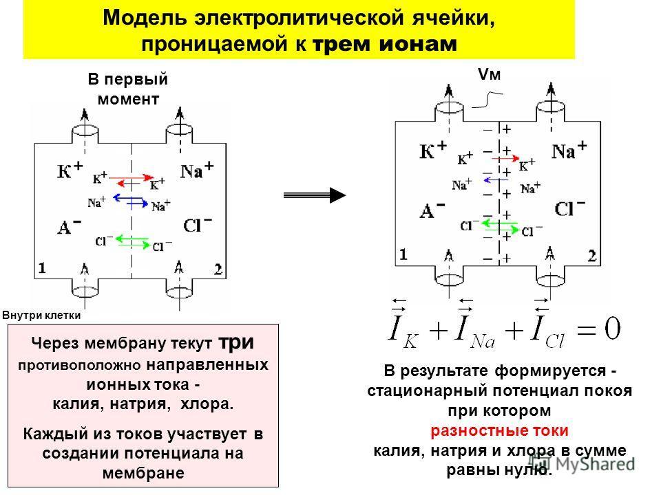 VмVм В результате формируется - стационарный потенциал покоя при котором разностные токи калия, натрия и хлора в сумме равны нулю. Через мембрану текут три противоположно направленных ионных тока - калия, натрия, хлора. Каждый из токов участвует в со