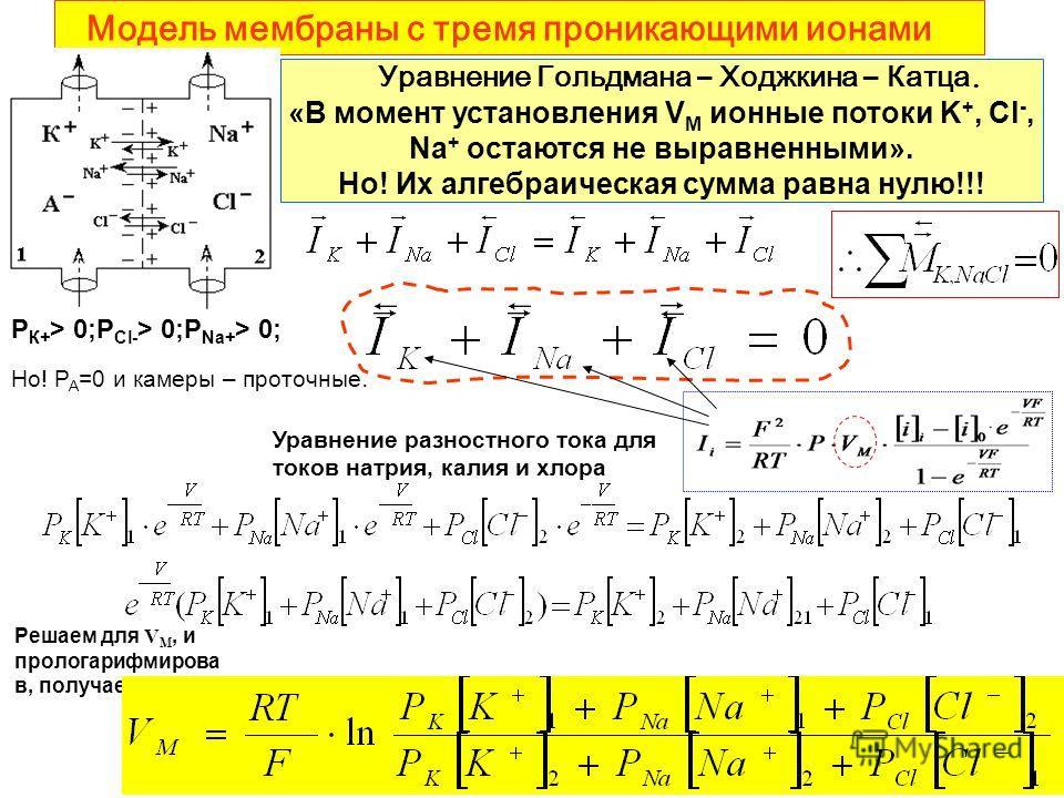 Модель мембраны с тремя проникающими ионами Уравнение Гольдмана – Ходжкина – Катца. «В момент установления V М ионные потоки K +, Cl -, Na + остаются не выравненными». Но! Их алгебраическая сумма равна нулю!!! Решаем для V M, и прологарифмирова в, по