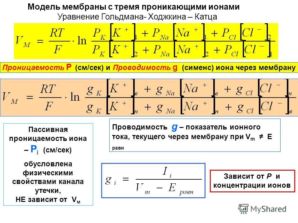 Модель мембраны с тремя проникающими ионами Уравнение Гольдмана- Ходжкина – Катца Проницаемость Р (см/сек) и Проводимость g (сименс) иона через мембрану Пассивная проницаемость иона – Р i (см/сек) обусловлена физическими свойствами канала утечки, НЕ