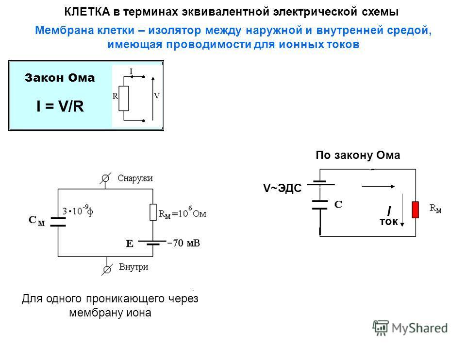 КЛЕТКА в терминах эквивалентной электрической схемы По закону Ома I = V/R V~ЭДС I ток Мембрана клетки – изолятор между наружной и внутренней средой, имеющая проводимости для ионных токов Закон Ома Для одного проникающего через мембрану иона