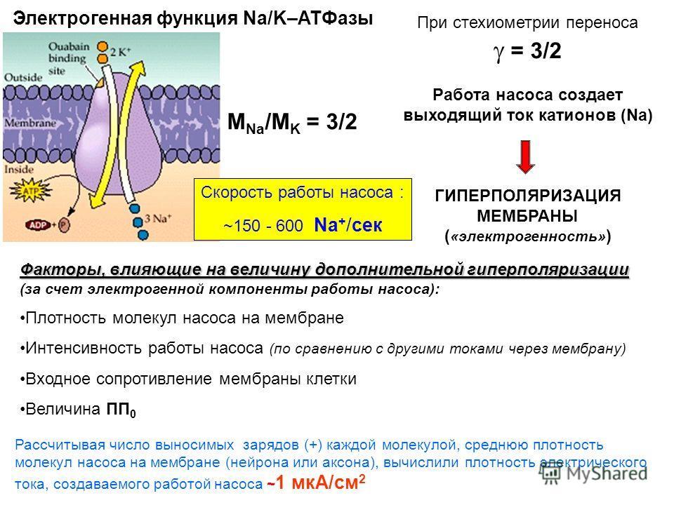 Электрогенная функция Na/K–ATФазы М Na /М K = 3/2 При стехиометрии переноса = 3/2 Работа насоса создает выходящий ток катионов (Na) ГИПЕРПОЛЯРИЗАЦИЯ МЕМБРАНЫ ( «электрогенность» ) Скорость работы насоса : ~150 - 600 Na + /сек Факторы, влияющие на вел