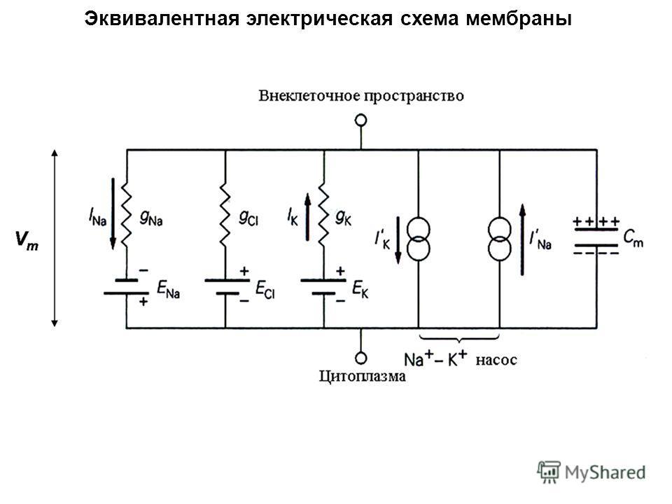 Эквивалентная электрическая схема мембраны