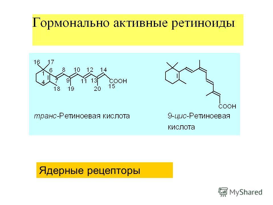 Ядерные рецепторы