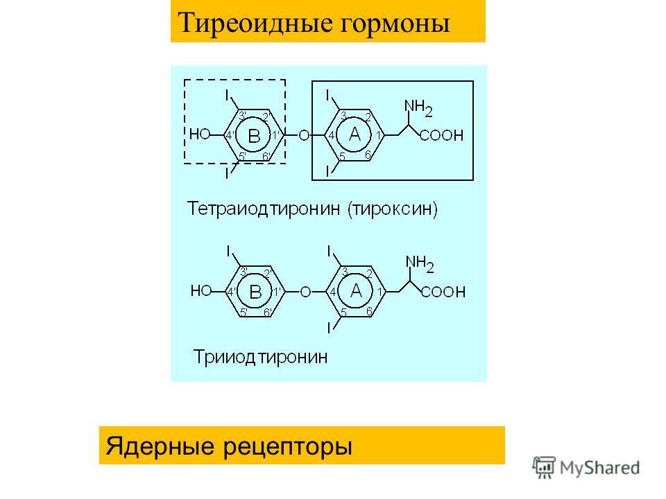 Тиреоидные гормоны Ядерные рецепторы