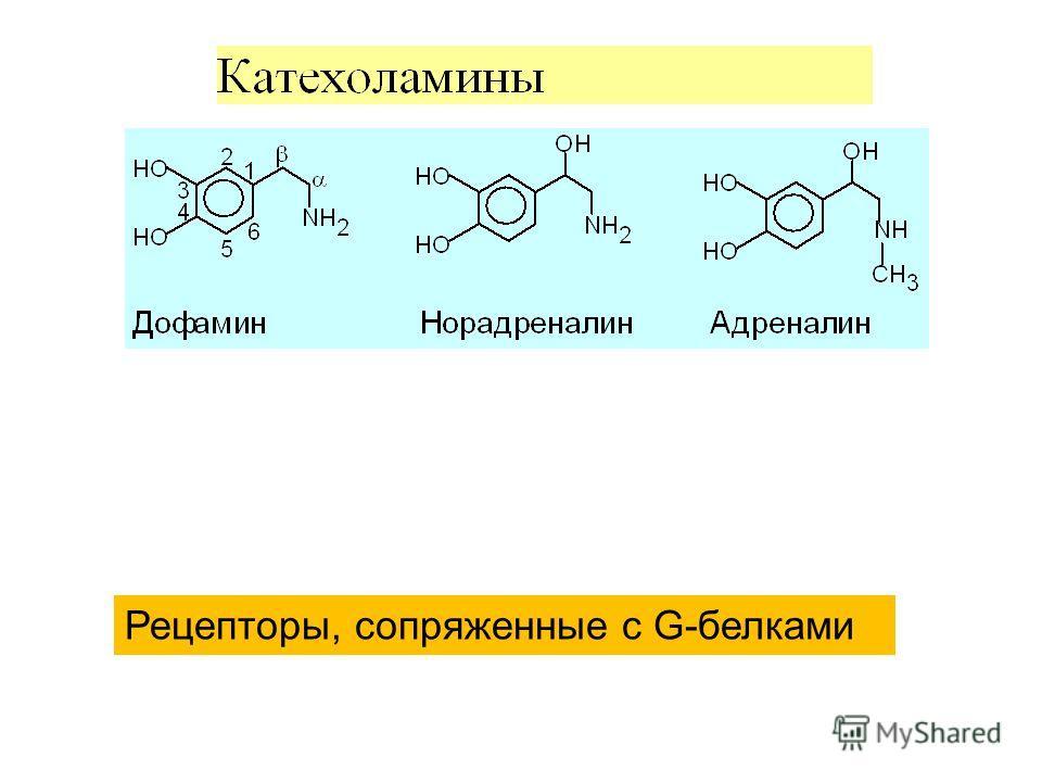 Рецепторы, сопряженные с G-белками