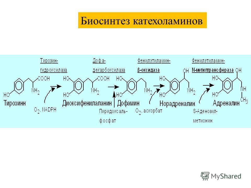 Биосинтез катехоламинов