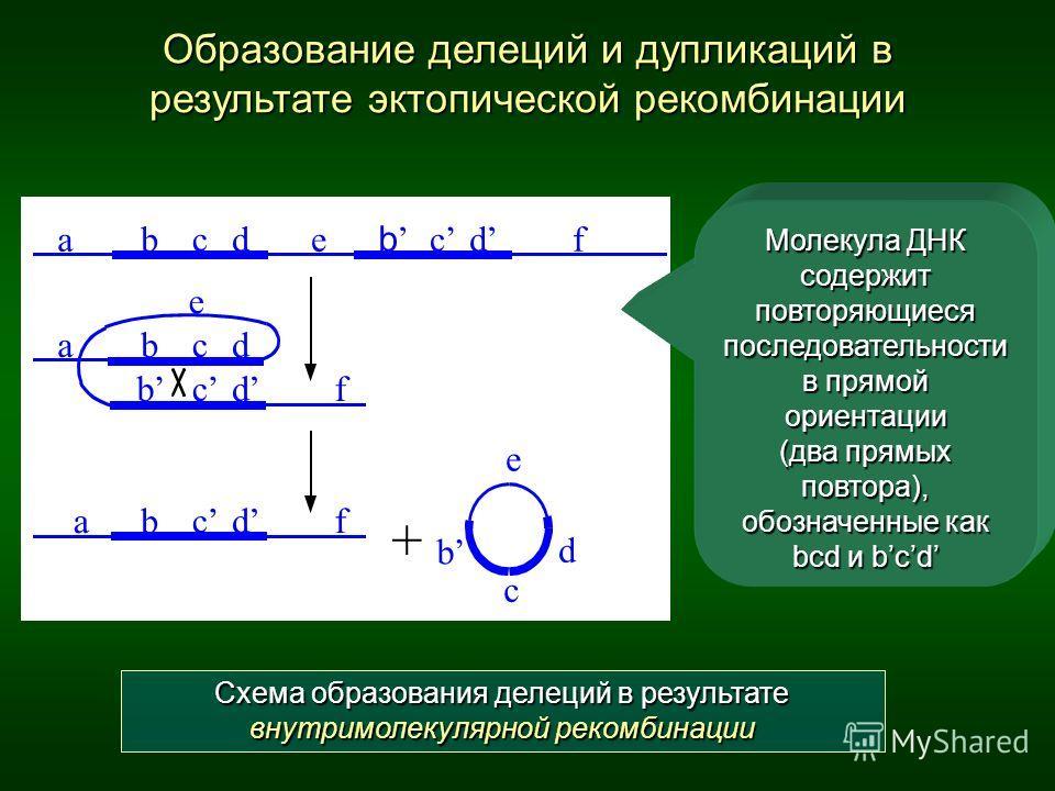 Схема образования делеций в результате внутримолекулярной рекомбинации Образование делеций и дупликаций в результате эктопической рекомбинации Молекула ДНК содержит повторяющиеся последовательности в прямой ориентации (два прямых повтора), обозначенн