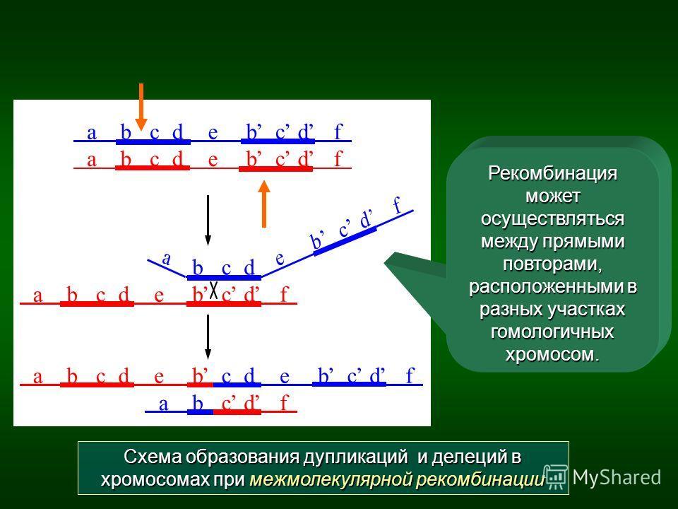 Схема образования дупликаций и делеций в хромосомах при межмолекулярной рекомбинации Рекомбинация может осуществляться между прямыми повторами, расположенными в разных участках гомологичных хромосом.
